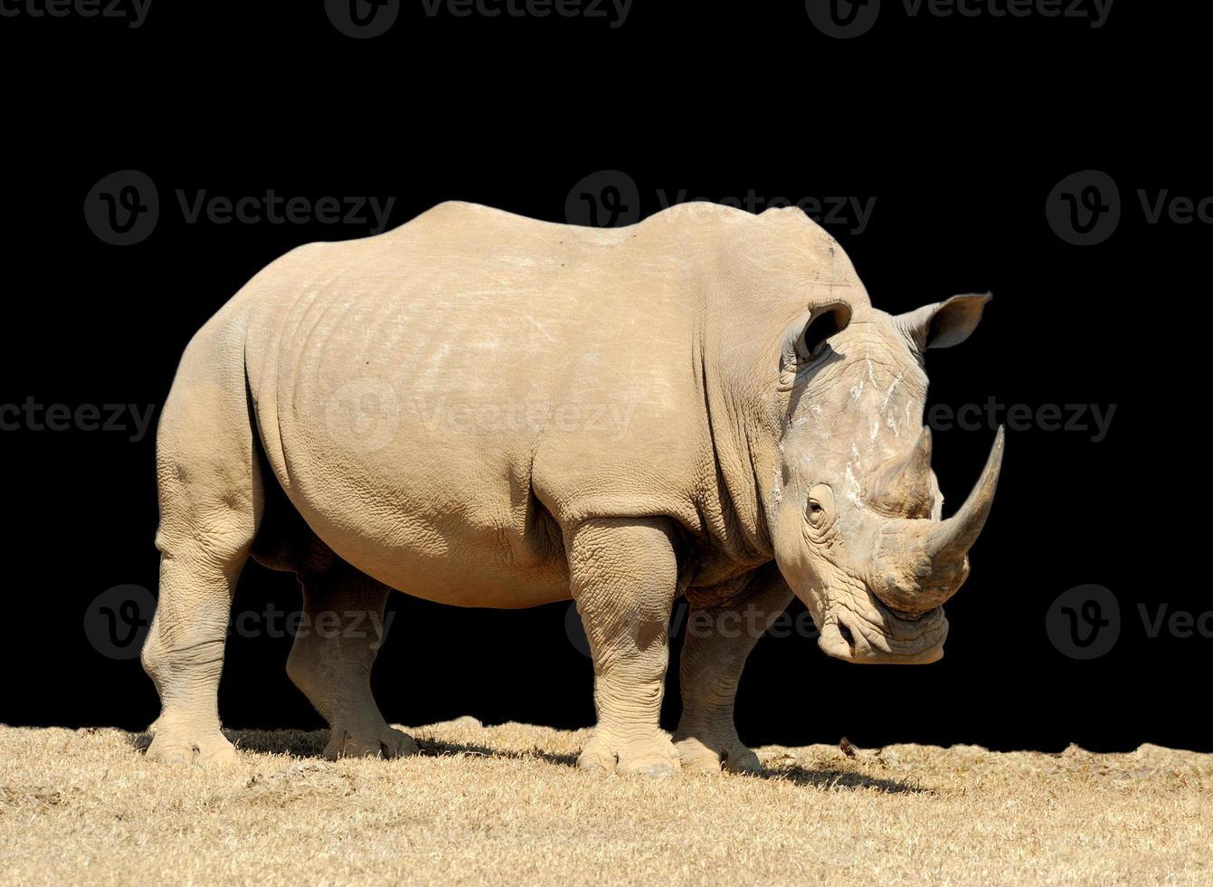 rinoceronte em fundo escuro foto