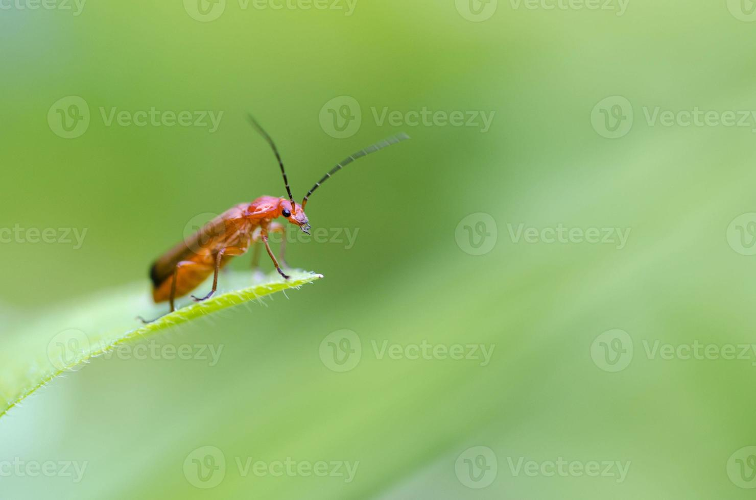 besouro, insetos foto