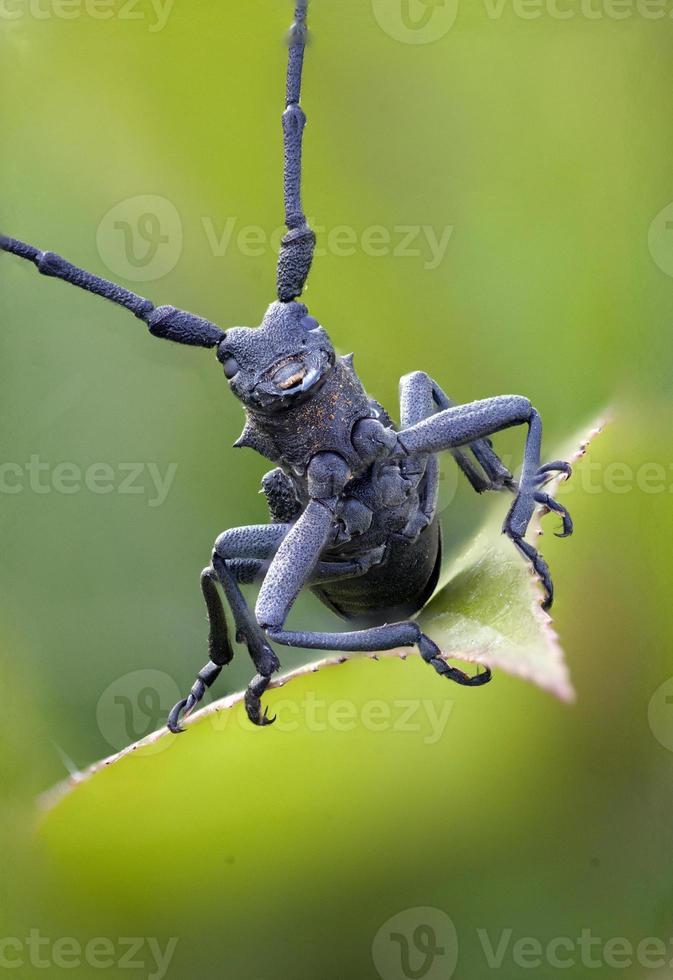 besouro majestoso em uma folha foto