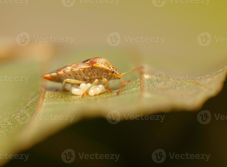 inseto besouro foto