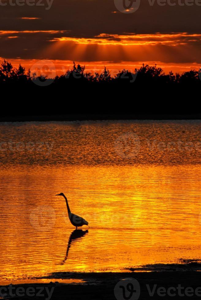 birdwatch do por do sol de florida foto