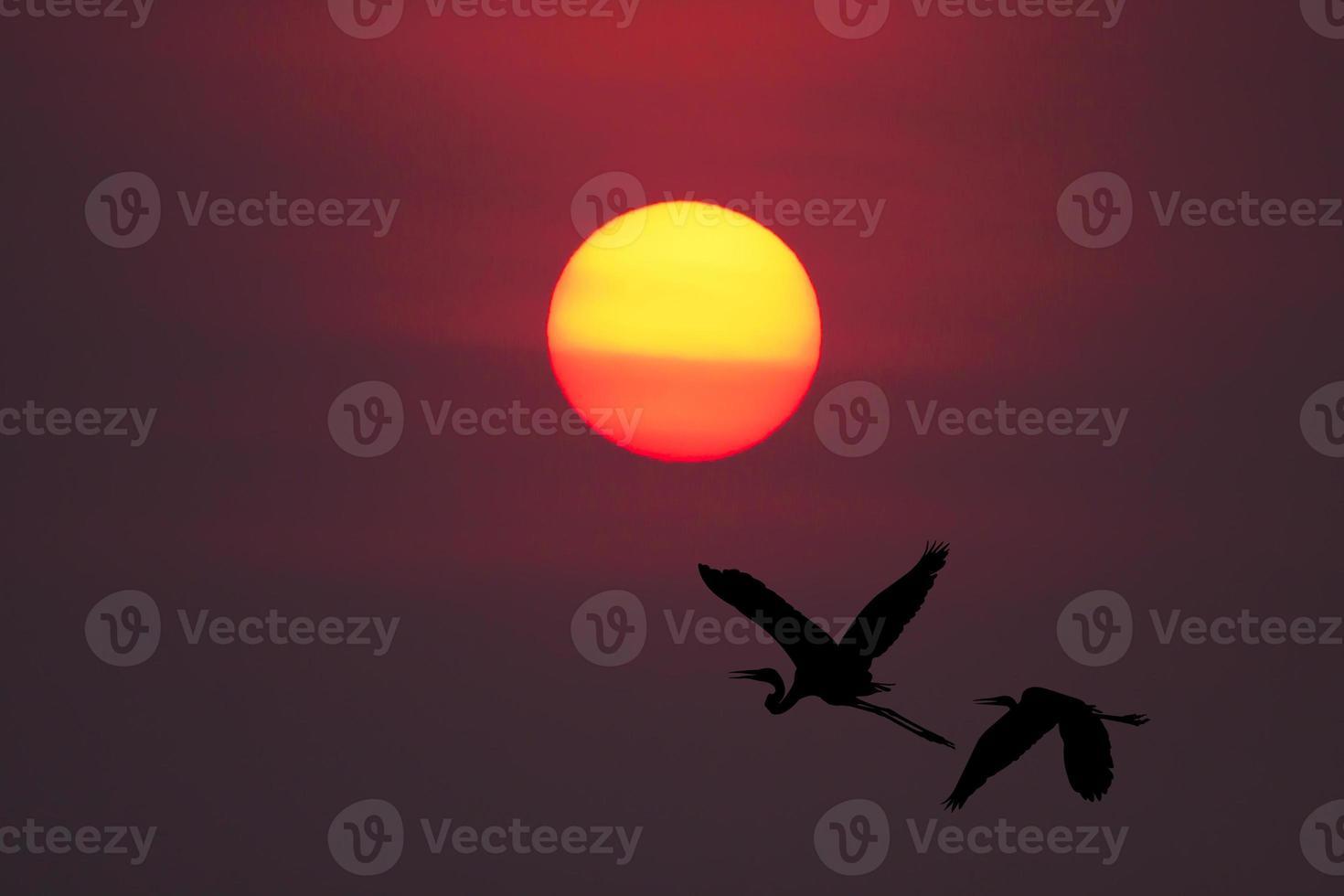 sombra de um pássaro voando para o sol foto