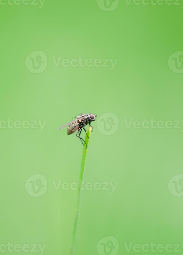 sessão de mosca feia foto