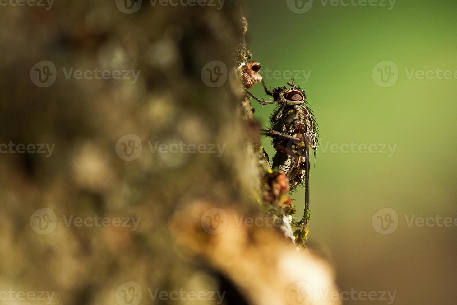 voar na árvore foto