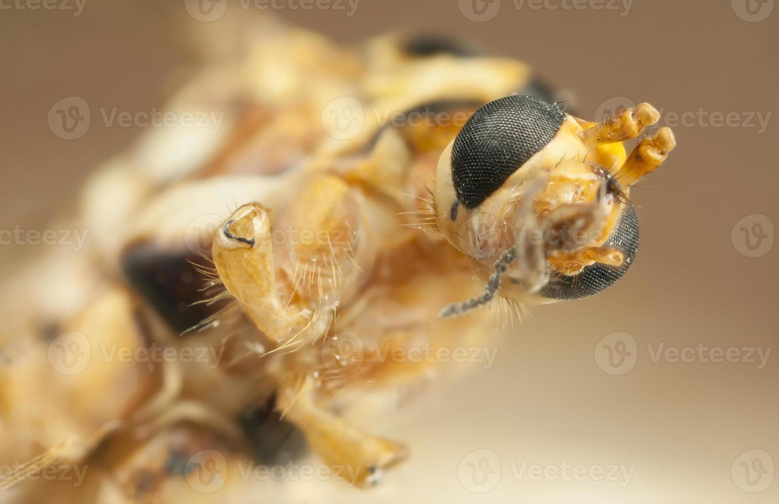 close de um rosto de inseto foto