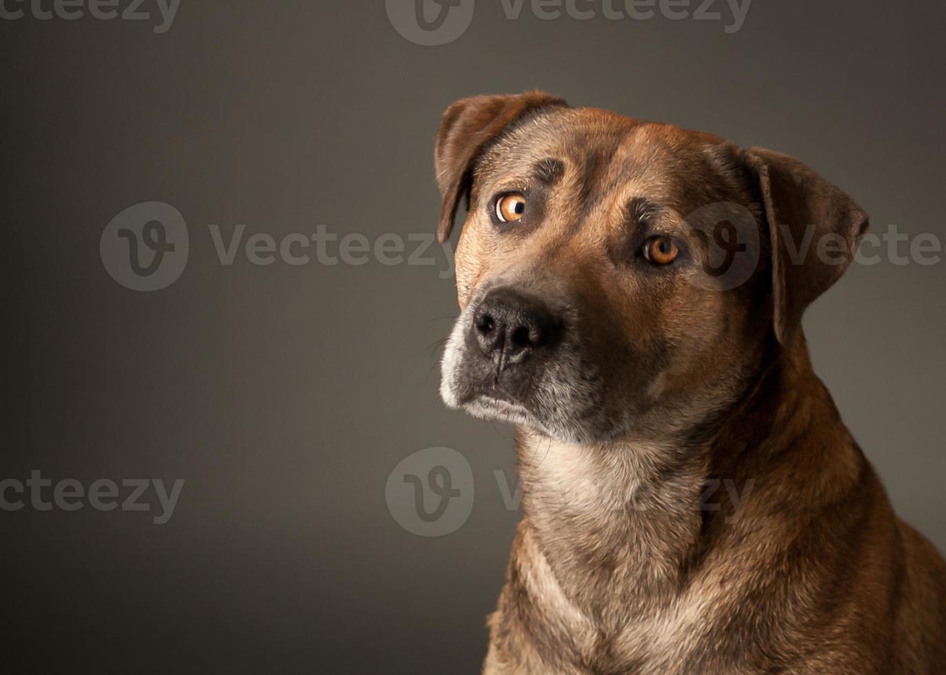 cão de raça misturada foto