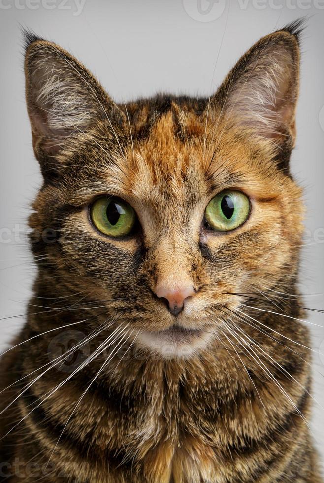 gato olhando intensamente foto