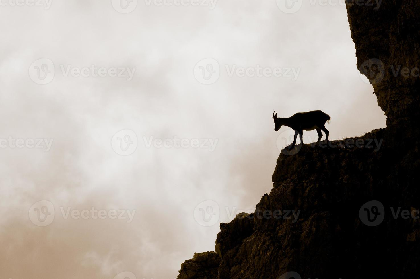 silhueta de cabra da montanha sobre os apls foto