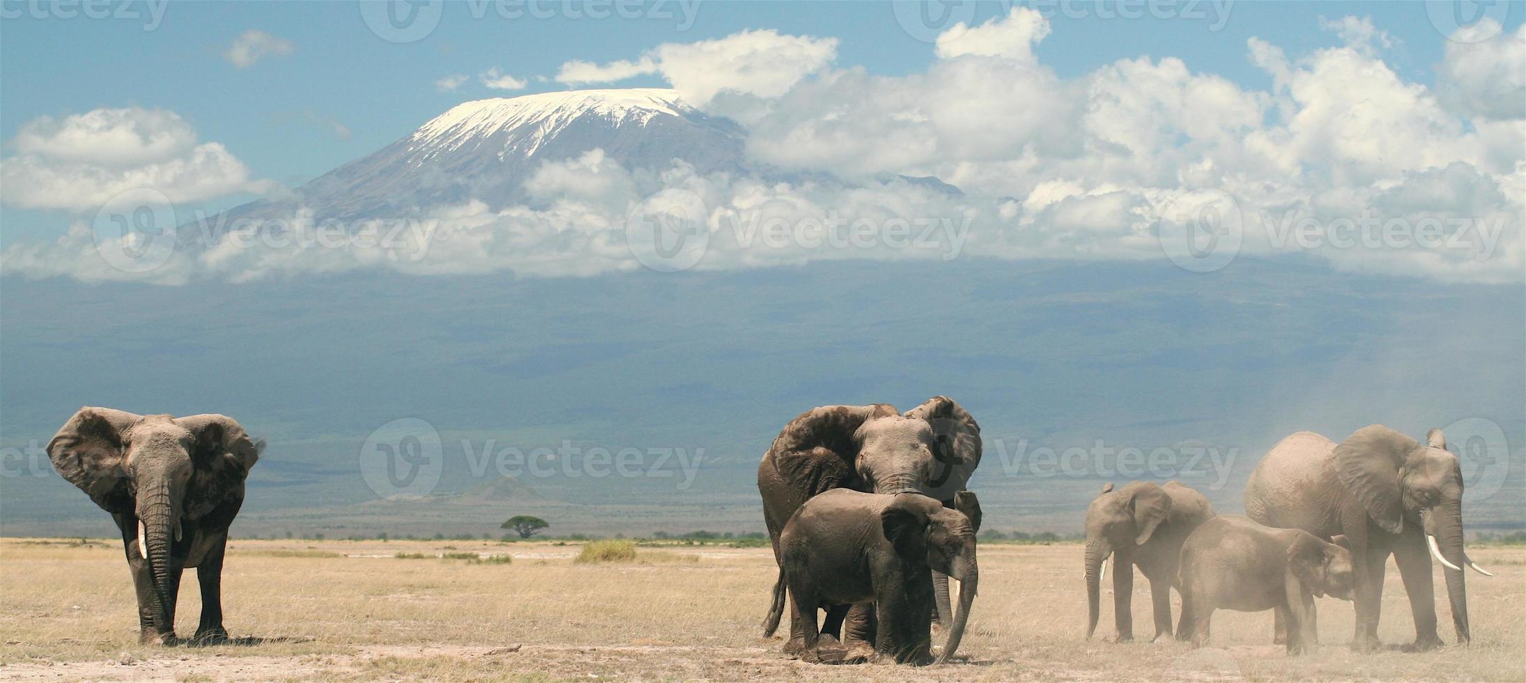 elefantes e a montanha foto