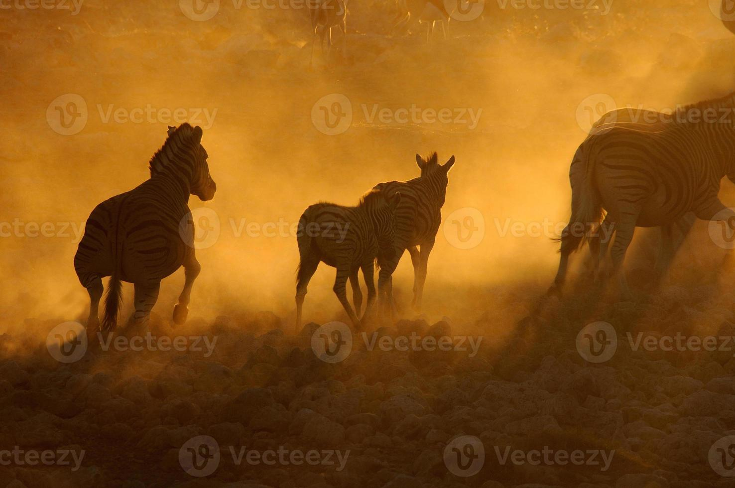 pôr do sol em okaukeujo, namíbia 3 foto