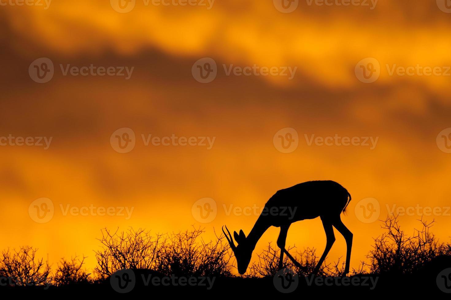 silhueta de gazela foto