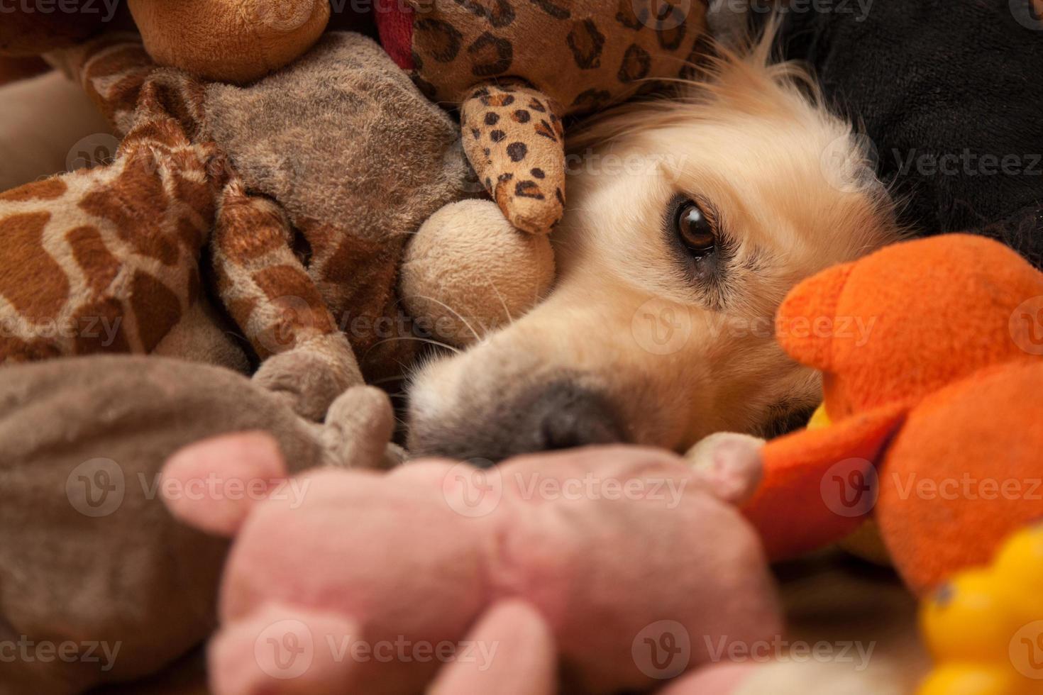 cão entre brinquedos para animais foto