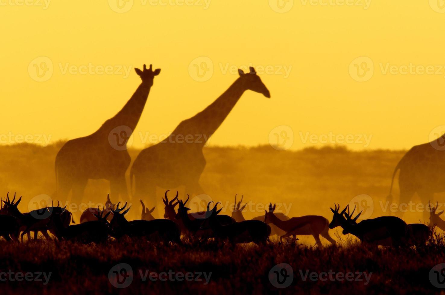 cena por do sol no parque nacional de etosha, namíbia foto