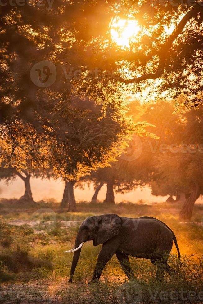 elefante na luz do sol foto