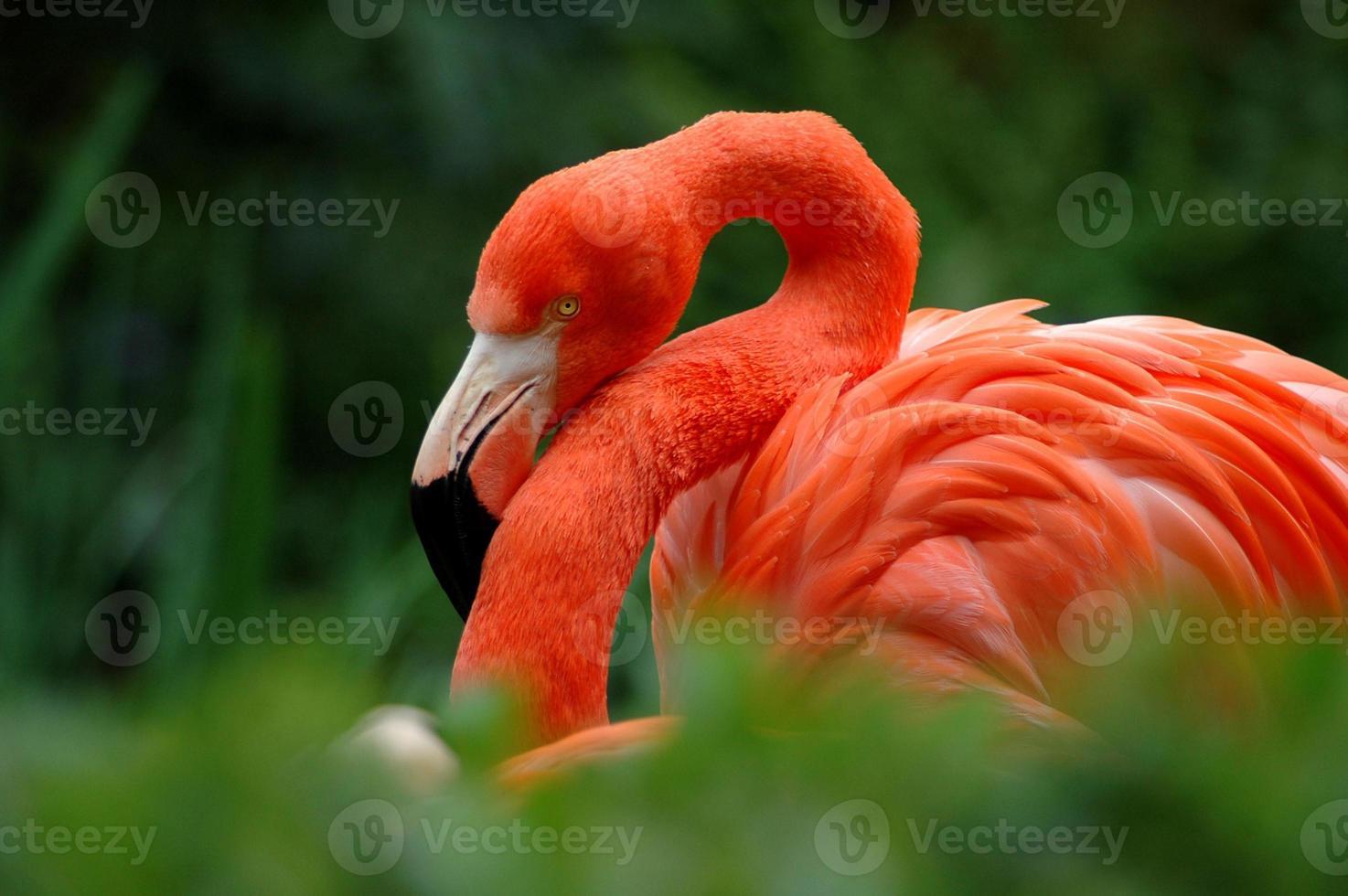 flamingo ii foto