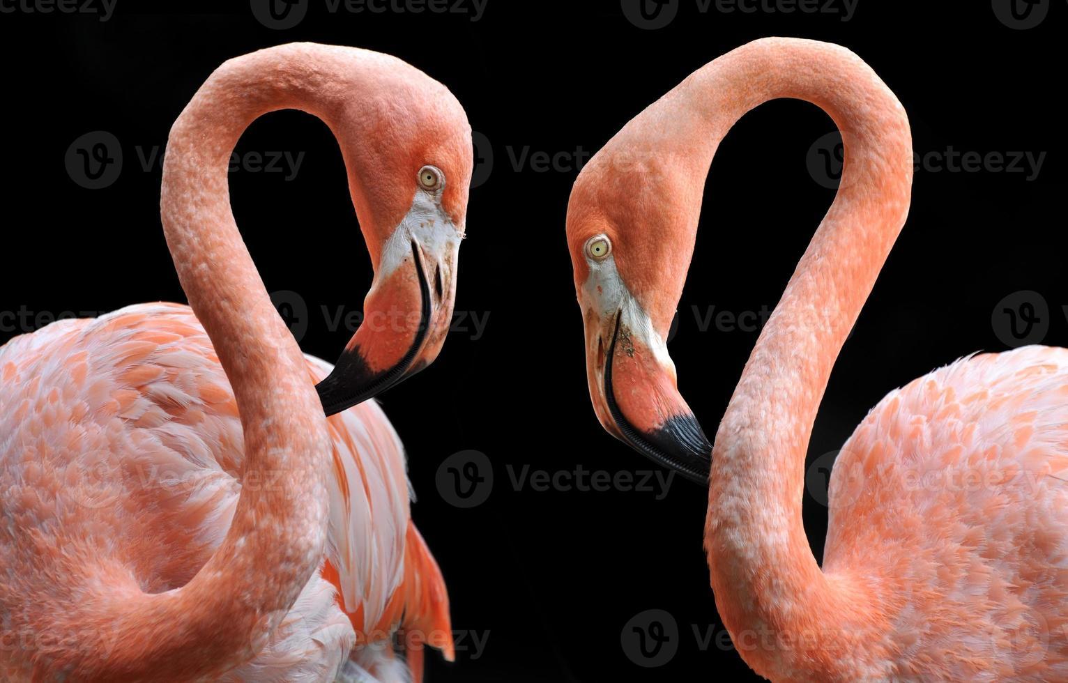 par de flamingos cor de rosa brilhantes foto