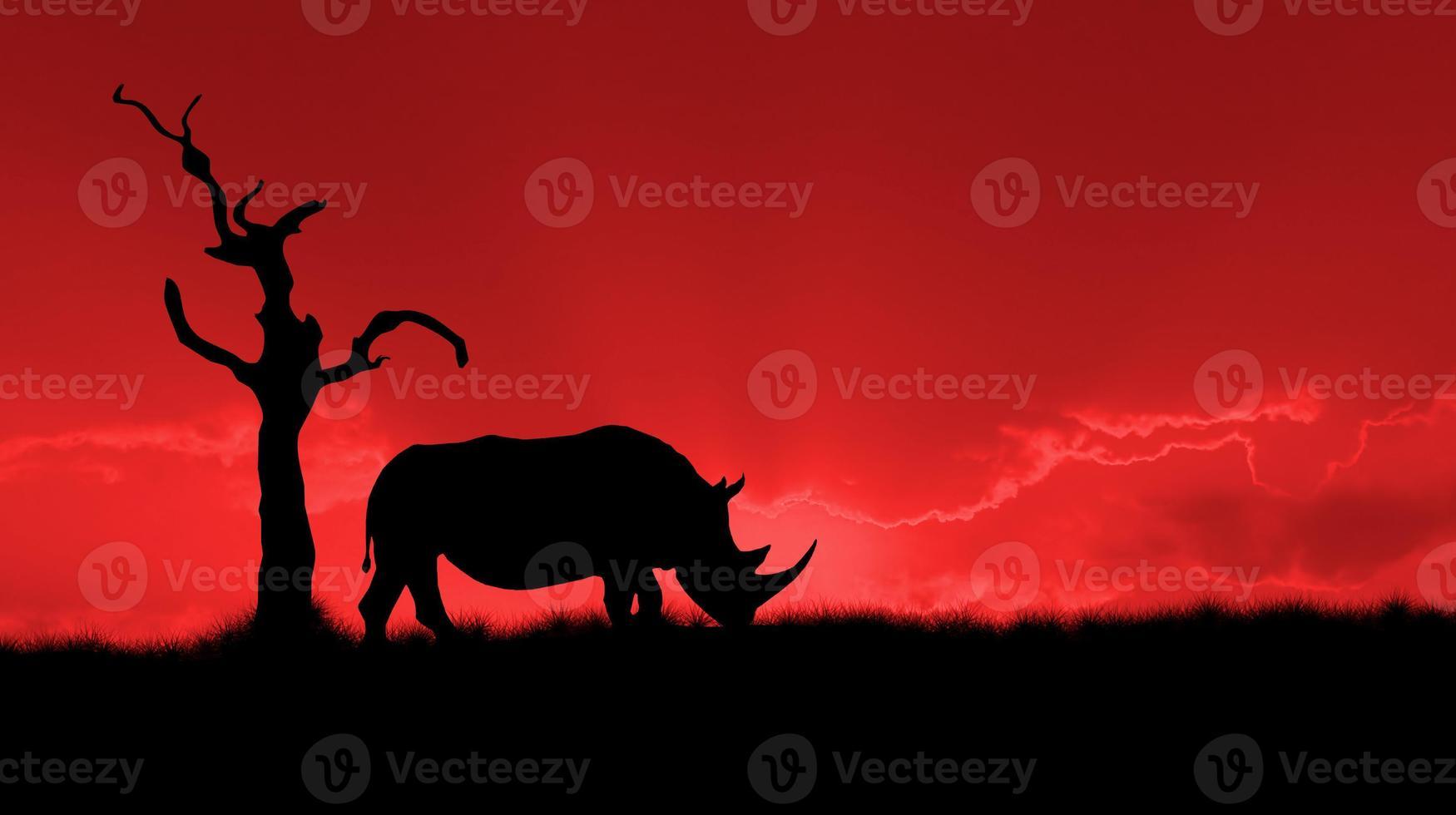 silhueta de rinoceronte africano foto