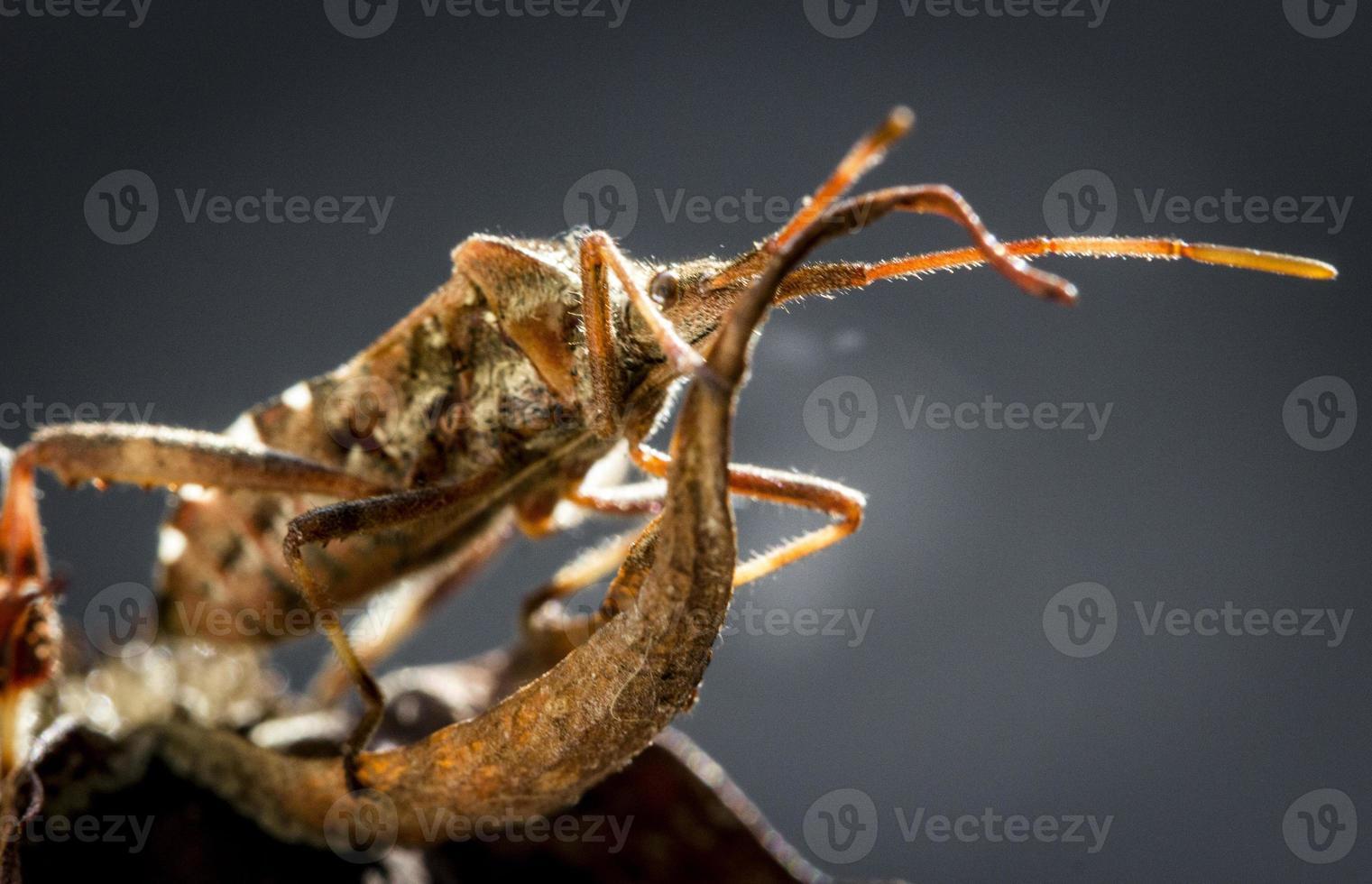 insetto foto