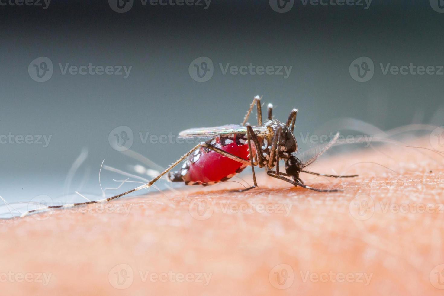 sugador de mosquito blood_set b-2 foto