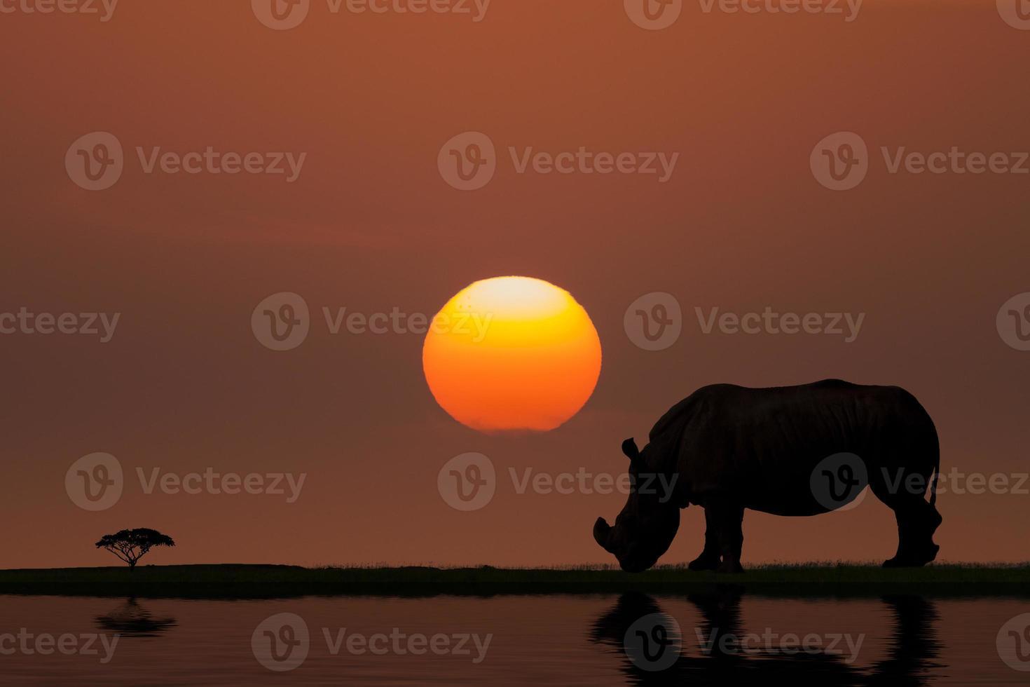 pôr do sol na áfrica foto