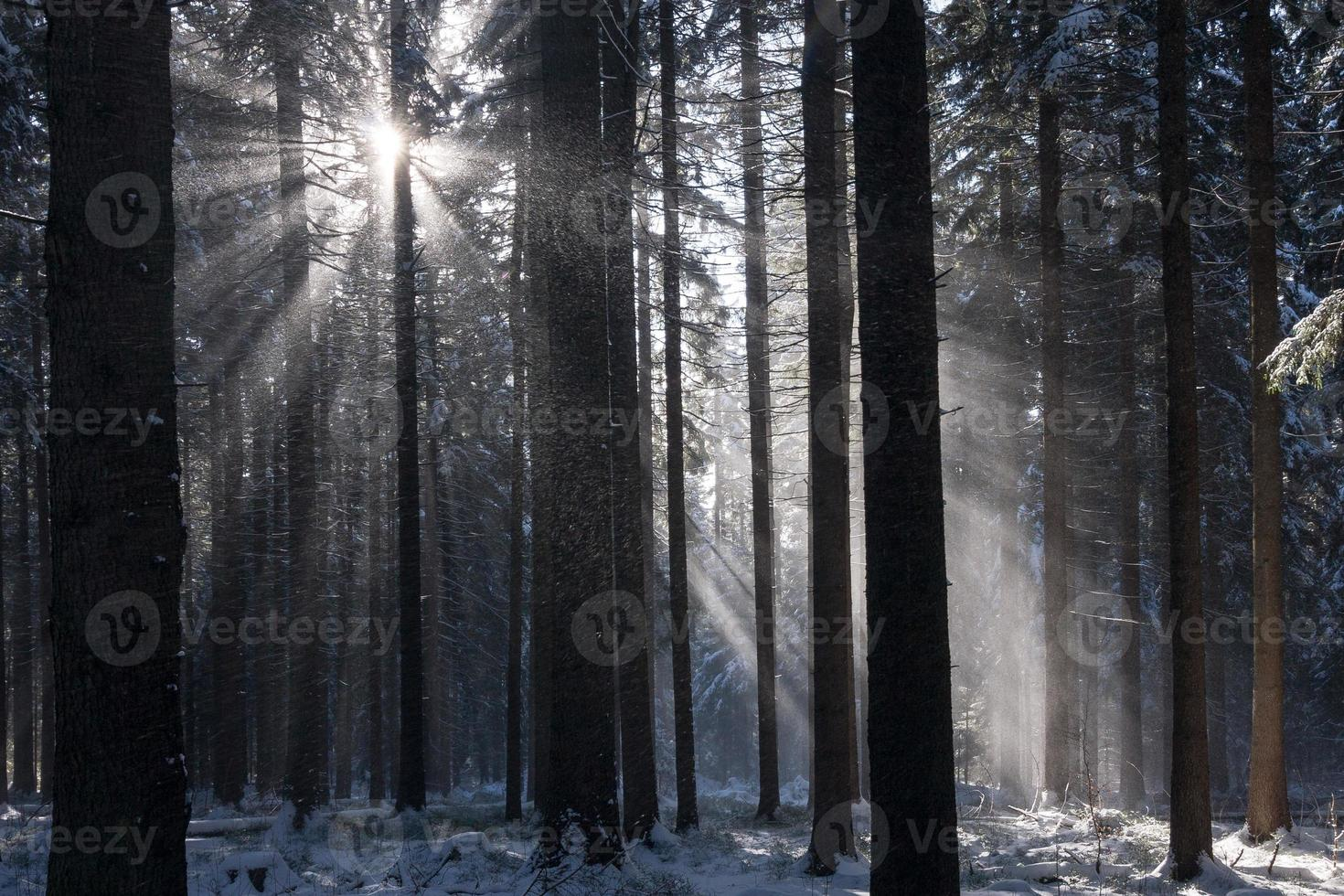 raios de sol na floresta de inverno foto