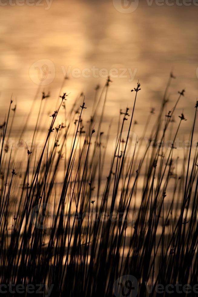 lago do sol foto