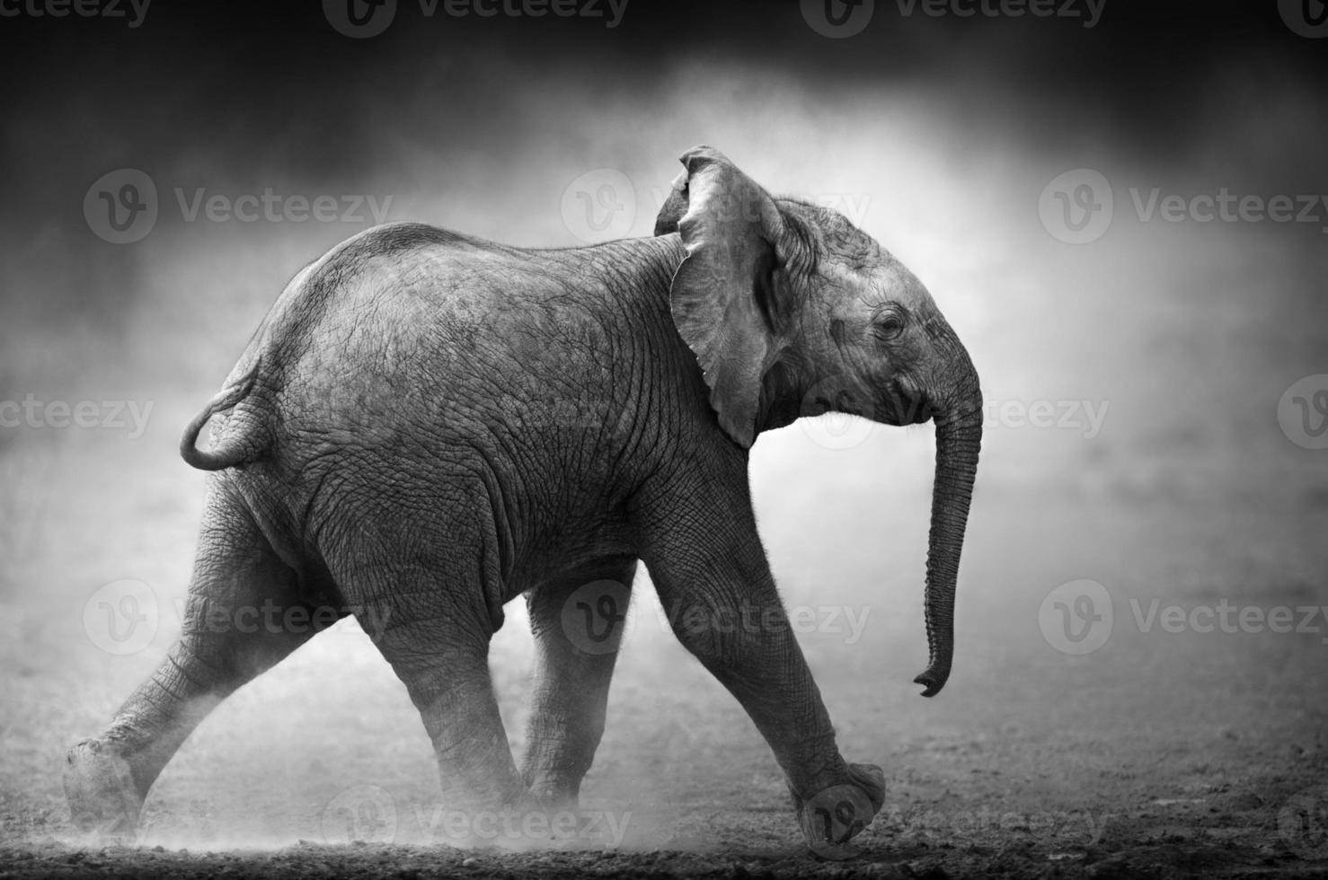 elefante bebê correndo (processamento artístico) foto