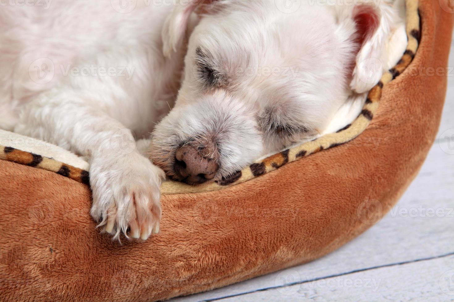 cachorro dormindo na cama do animal de estimação foto