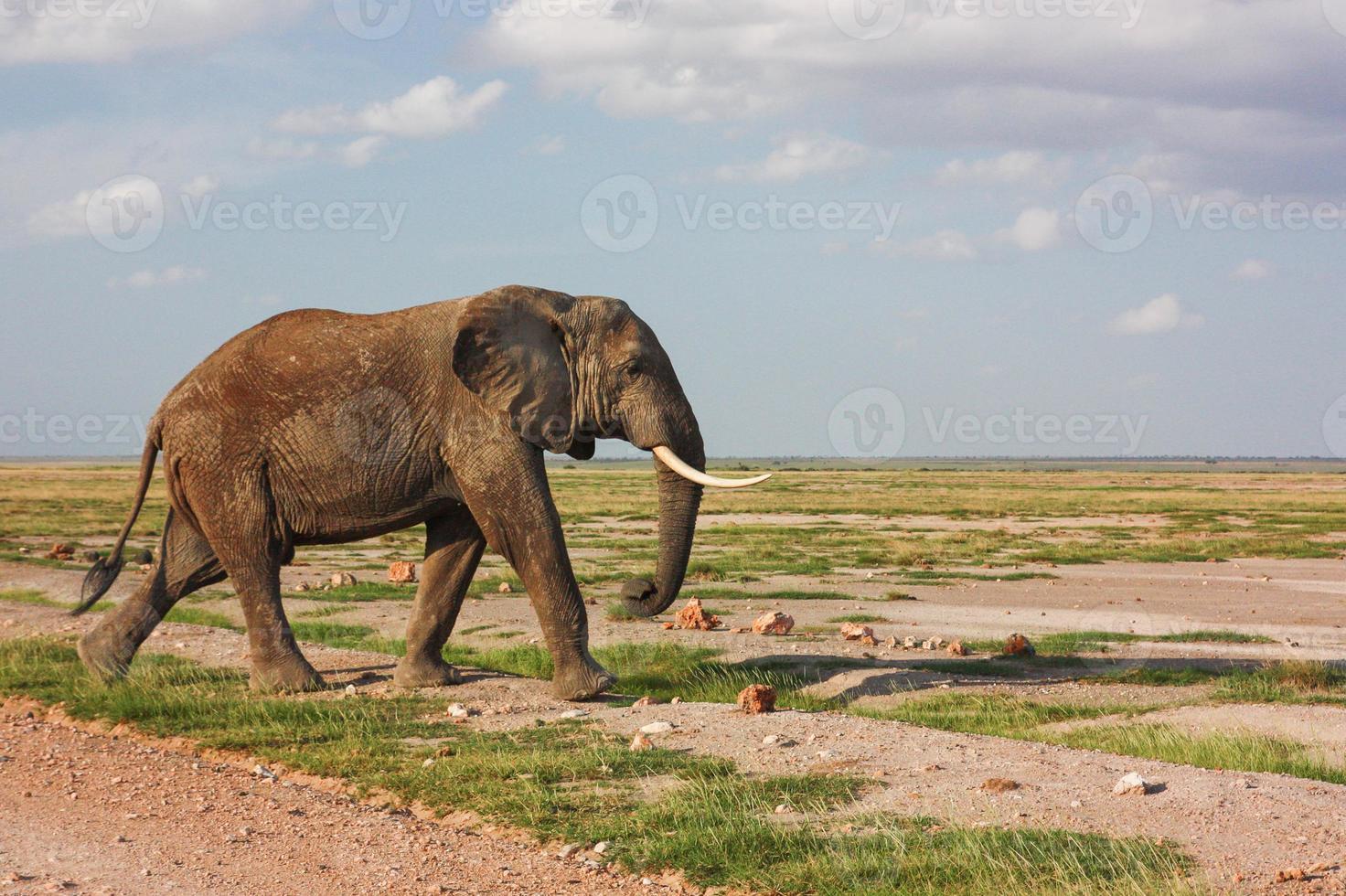 elefante andando foto