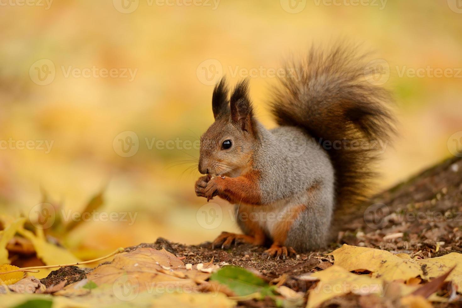 esquilo sentado em uma grama foto