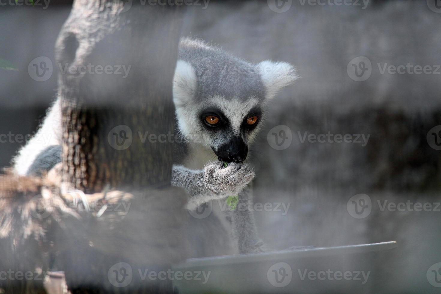 macaco na gaiola foto