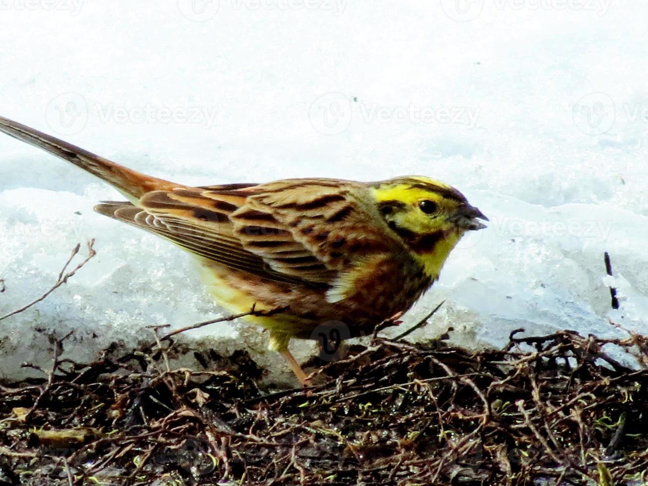 pássaros íngremes foto