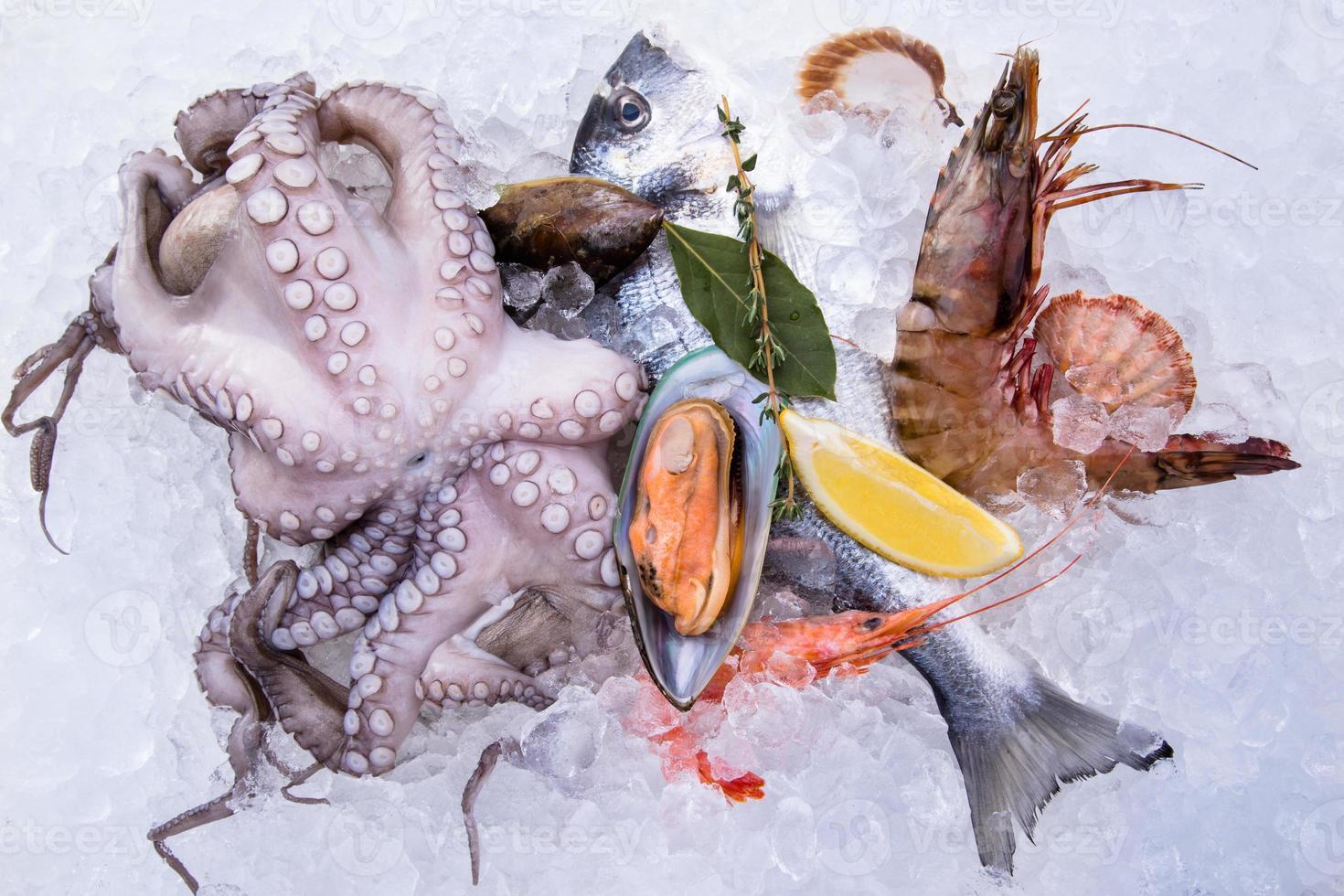 frutos do mar frescos no gelo foto