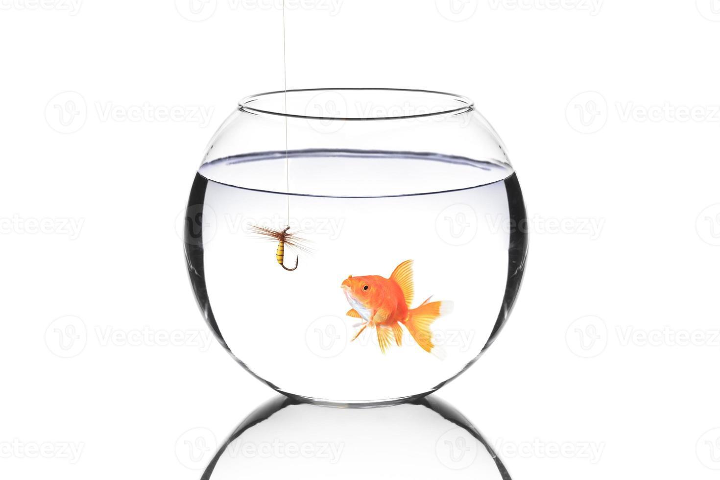 aquário com um anzol de pesca foto