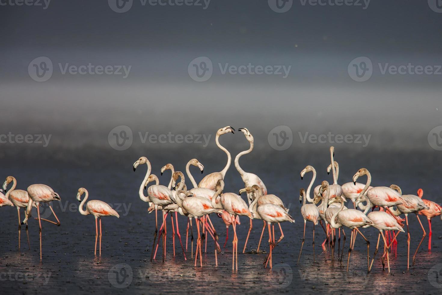 o flamingo menor, que é a principal atração para os turistas foto