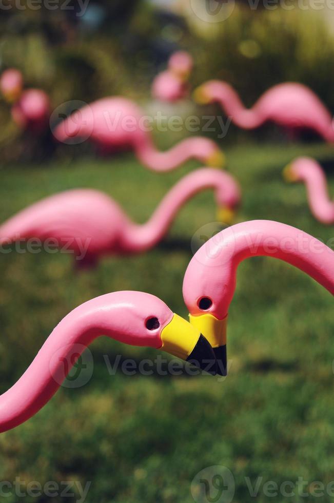 flamingos cor de rosa do gramado foto