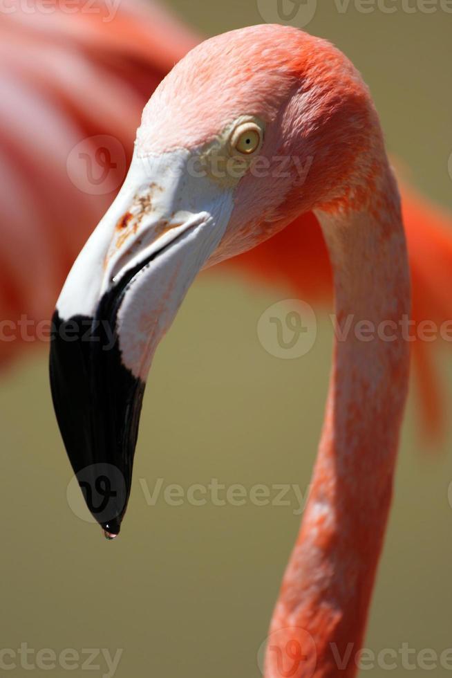 imagem de flamingo foto
