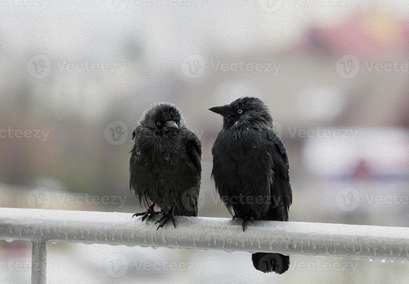 dois corvos molhados, sentado na varanda, trilho, estilização de tinta a óleo foto