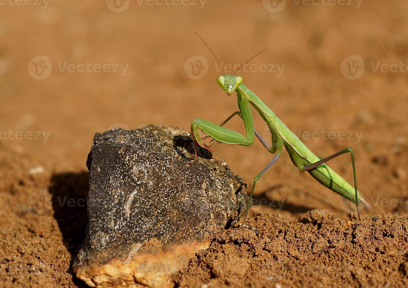 mantis-shooting foto