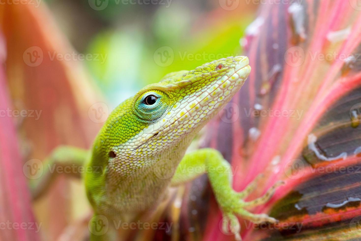 close-up de um lagarto foto