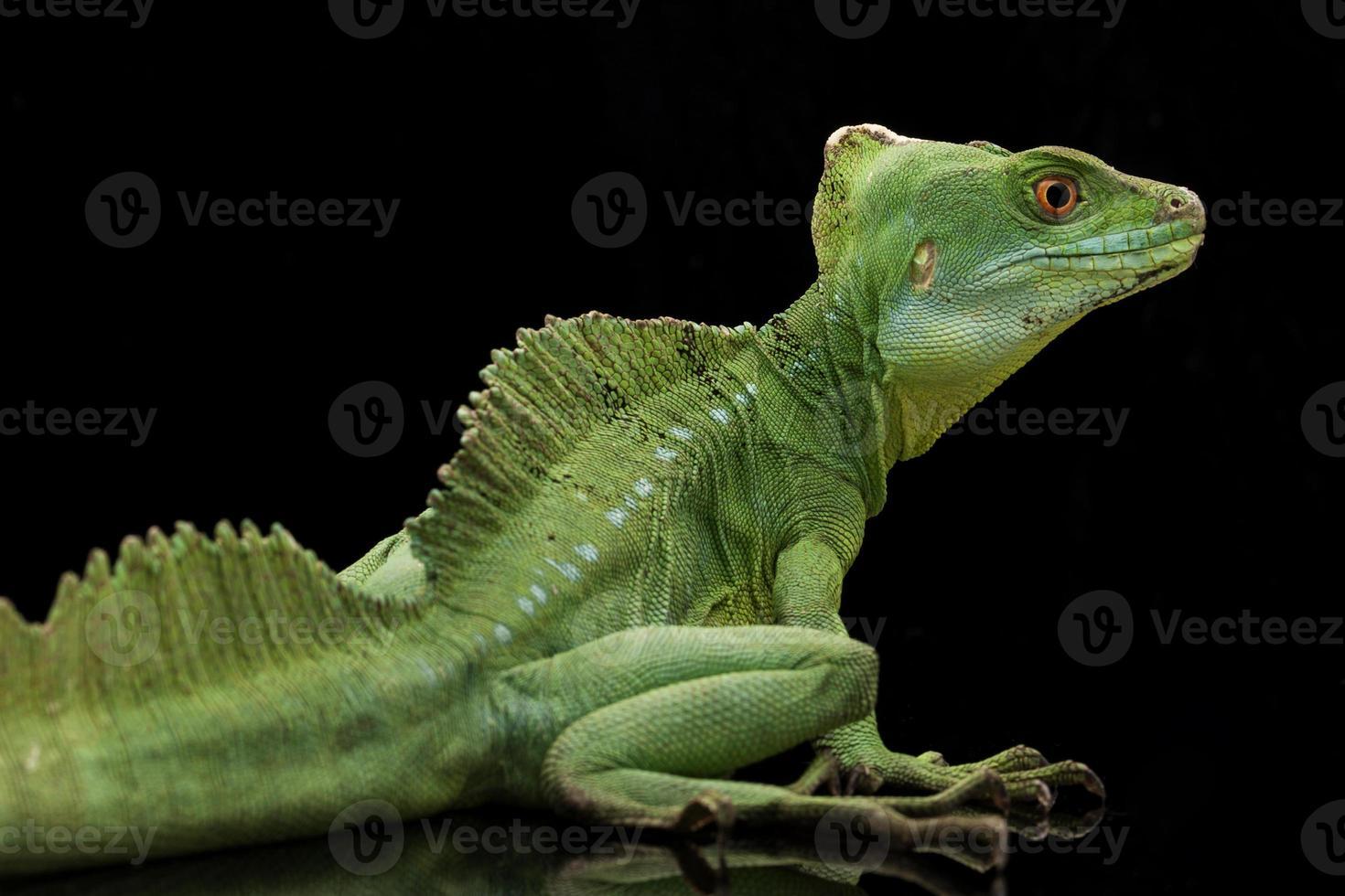 manjericões verdes foto