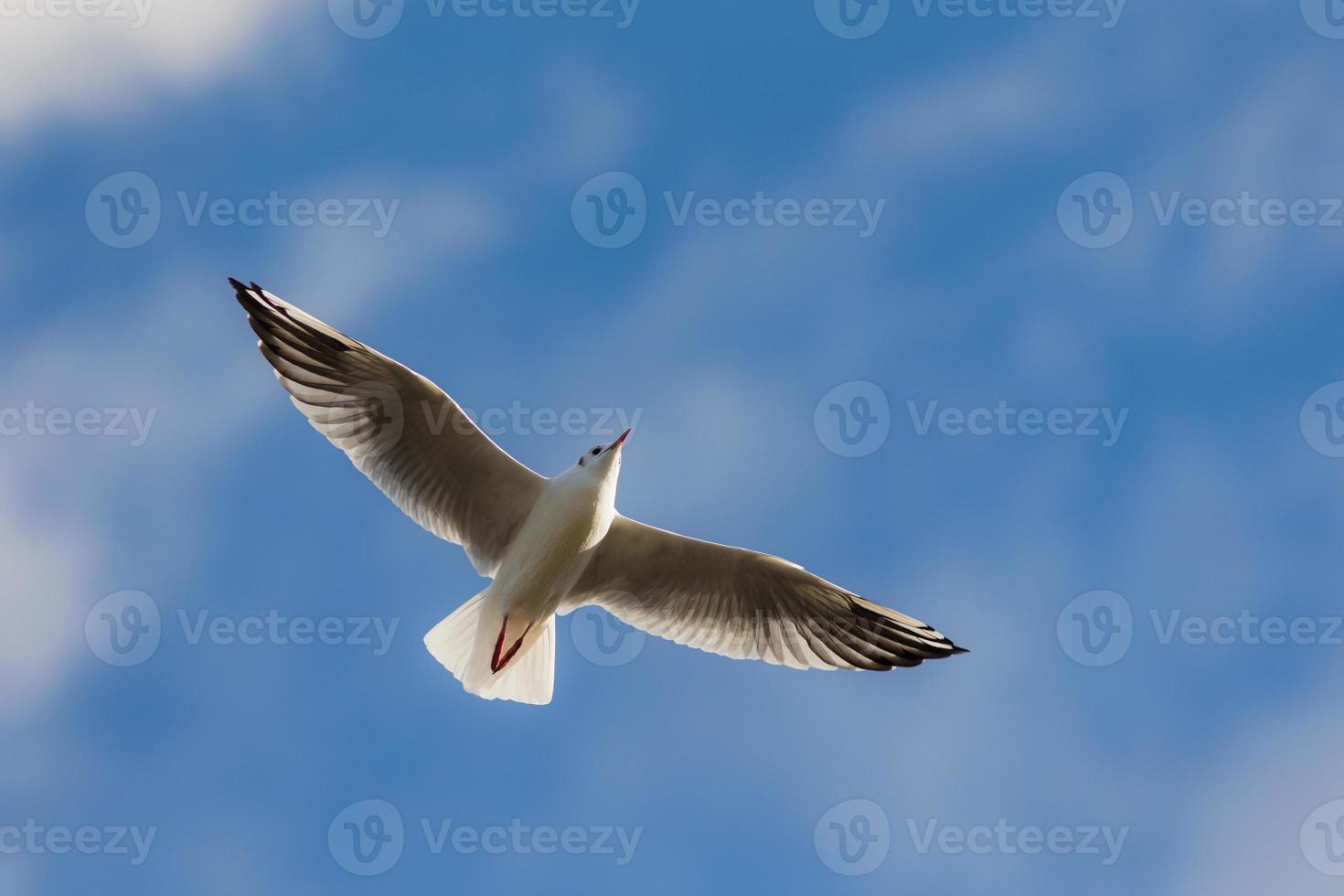 voando foto