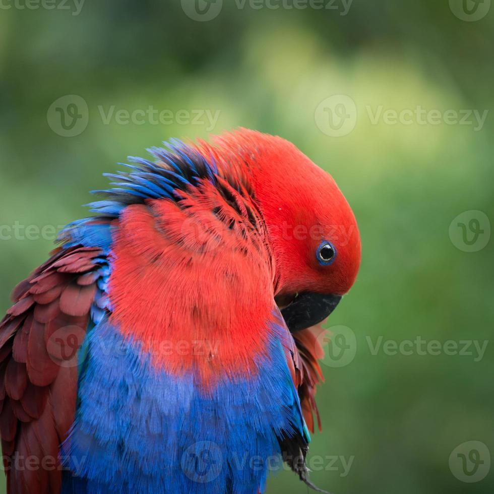 pássaro papagaio foto