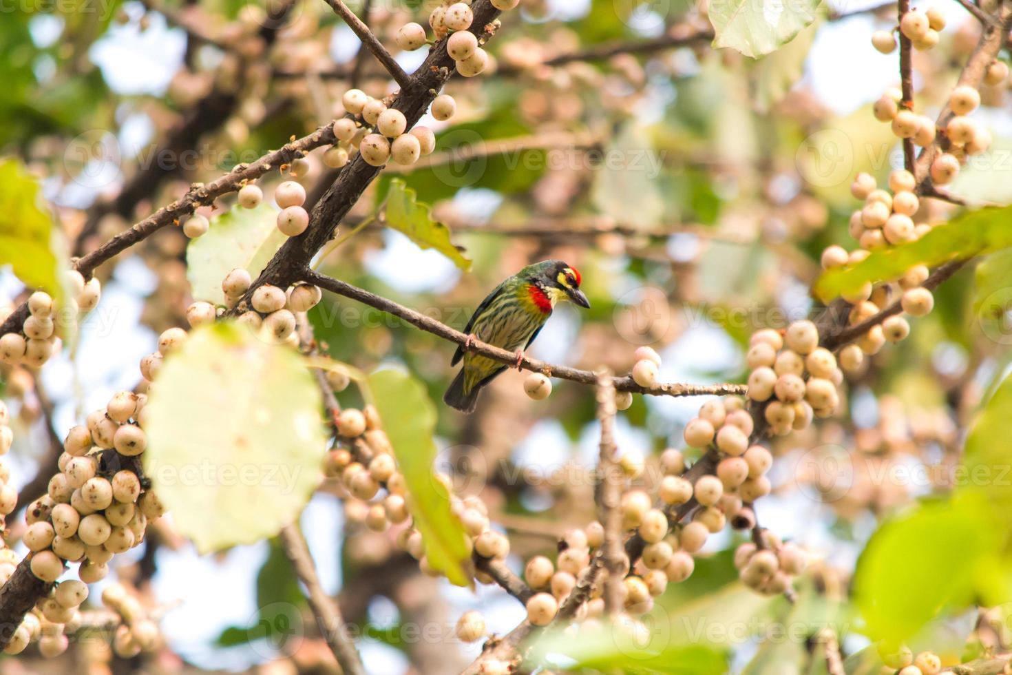 pássaros no parque foto