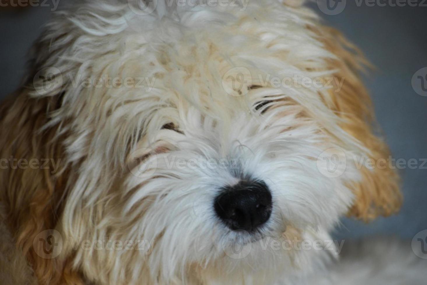 cachorro fofo foto
