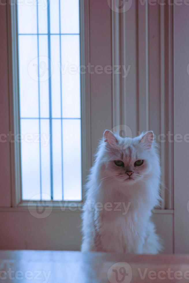 porteiro gato foto