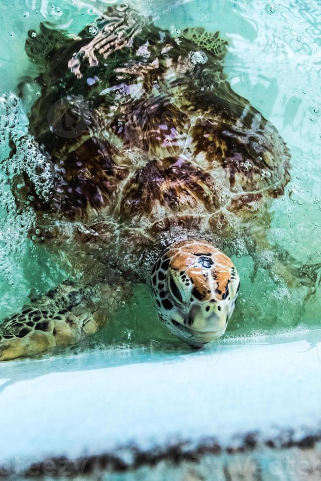 tartaruga marinha foto