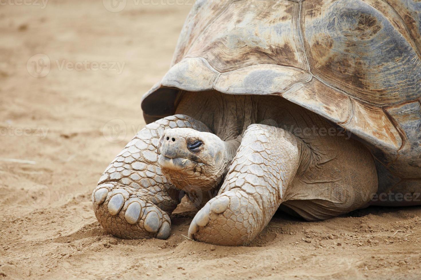 tartaruga de seychelles foto