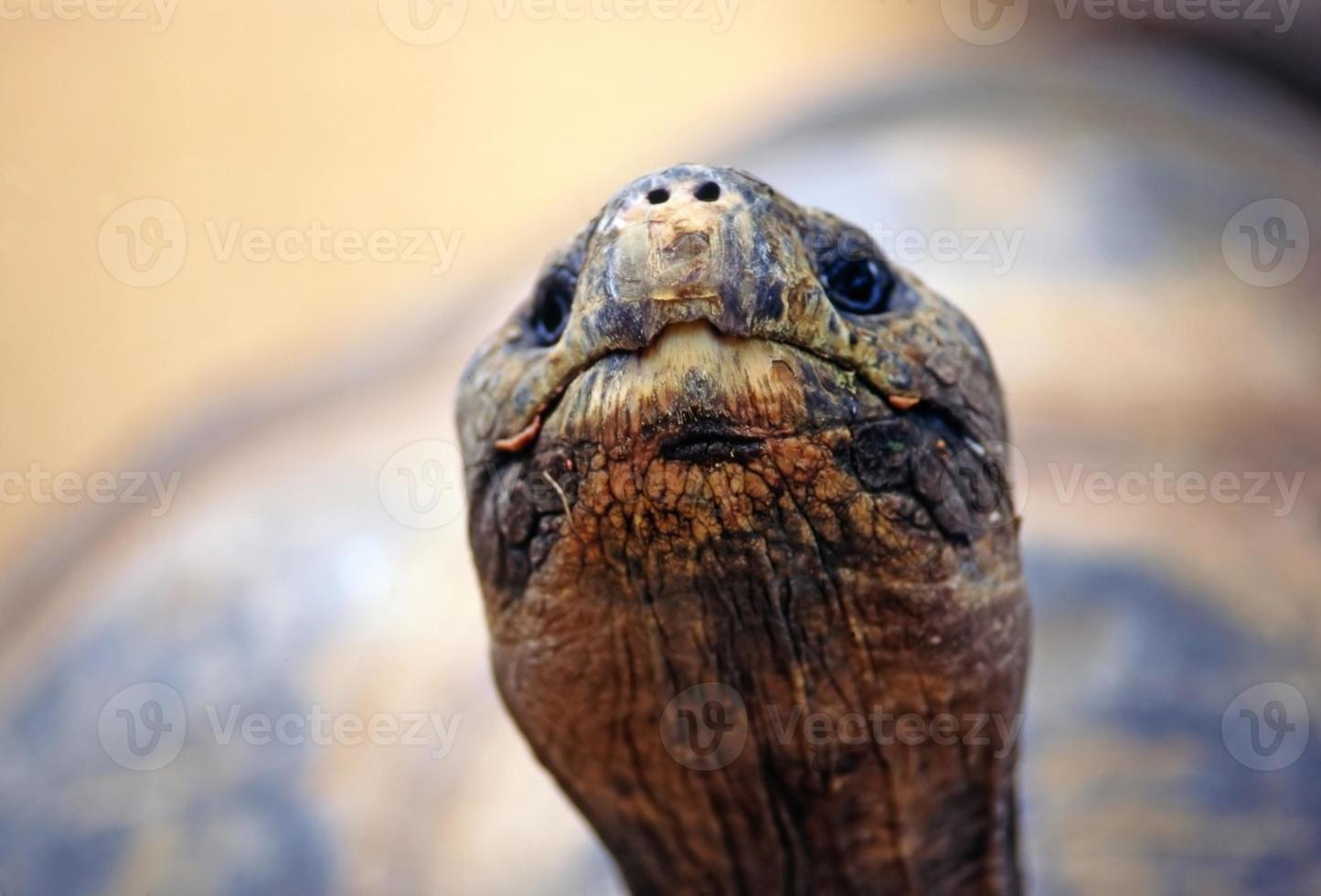 tartaruga foto