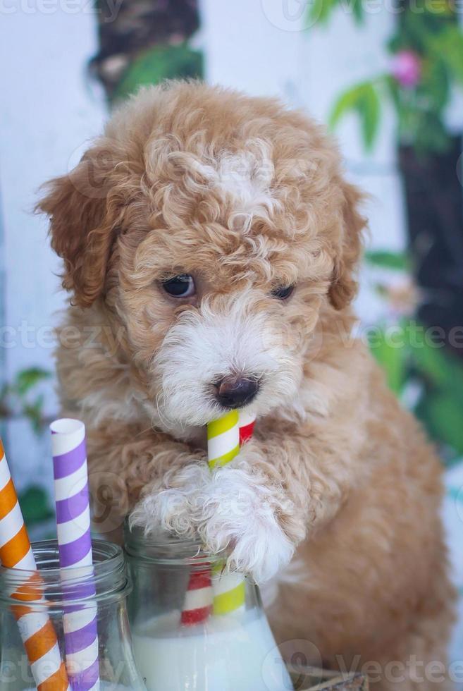 filhote de cachorro bebendo leite de um canudo foto